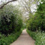 Apple Blossom Rennys Lane June 2013
