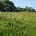Small Meadow