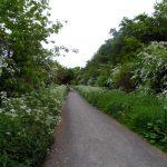 Summer 2013 Rennys Lane