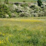 Wildflowers Large Meadow 01