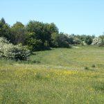 Wildflowers Large Meadow 02