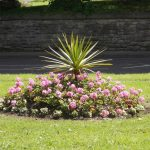 Fellside Gardens Flowers