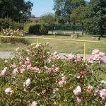 Rosebeds Belmont Community Centre